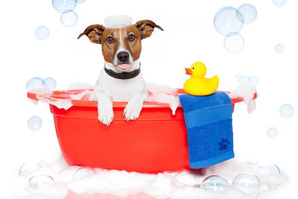cane prendendo un bagno - bacinella metallica foto e immagini stock
