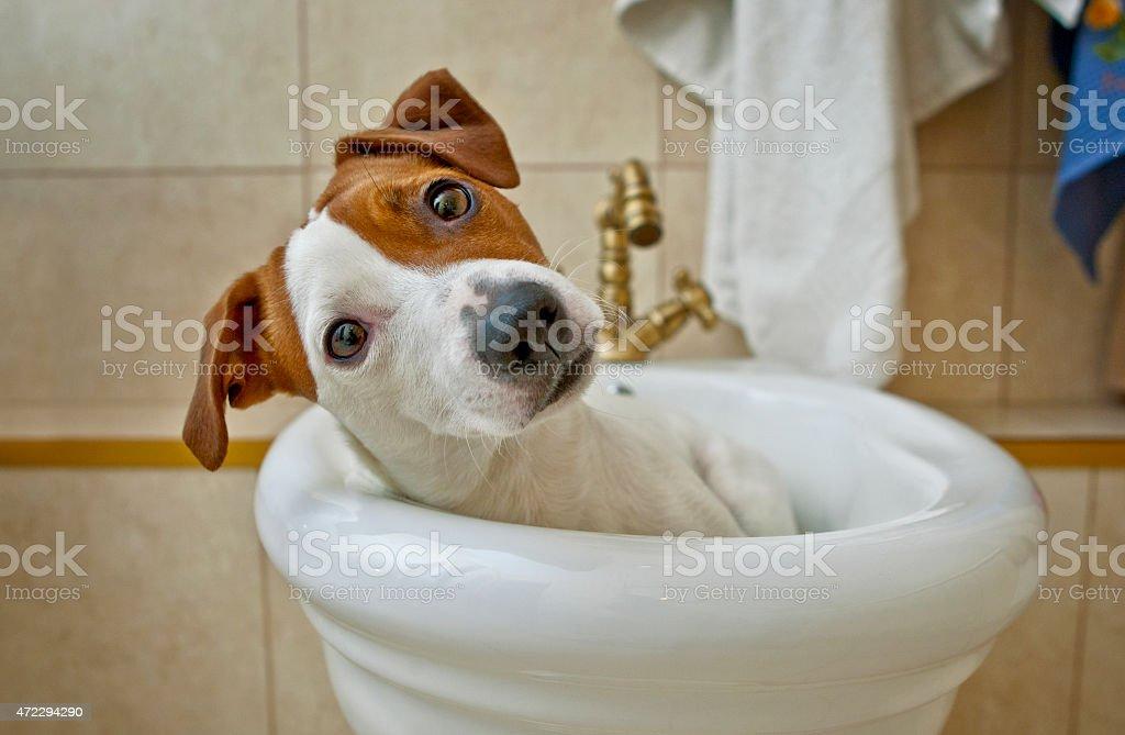 Dog taking a bath stock photo
