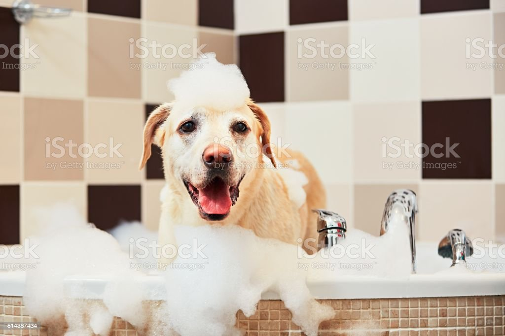 Dog taking a bath stock photo