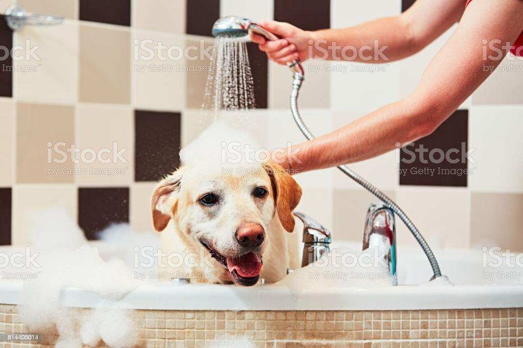 Cachorro tomando banho - foto de acervo