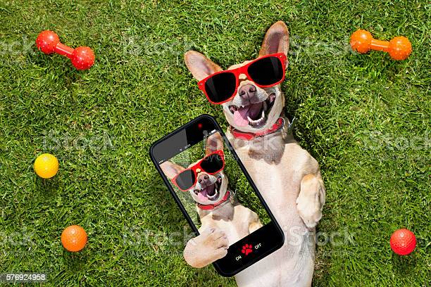 Dog taking a selfie picture id576924958?b=1&k=6&m=576924958&s=612x612&h=htrj4v9lrc9tgjgi1fmo5dyn cw2xpsjvl6qeqgkuik=