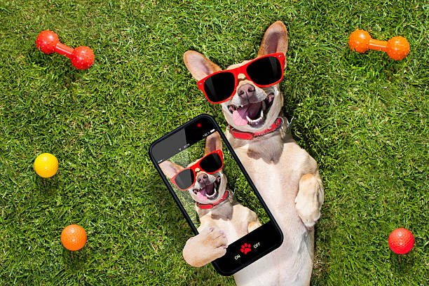 Dog taking a selfie picture id576924958?b=1&k=6&m=576924958&s=612x612&w=0&h=h9cxa 9svewbdwgcnbeqrwh stfxxpo6aszi8zbeifk=
