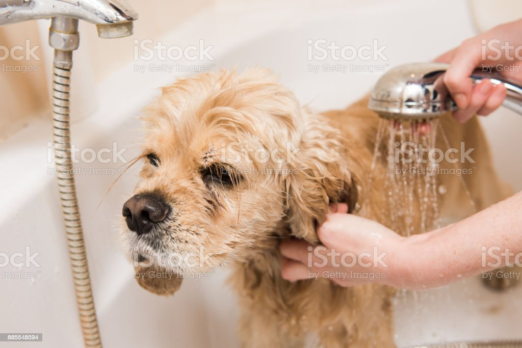 A dog taking a shower stock photo