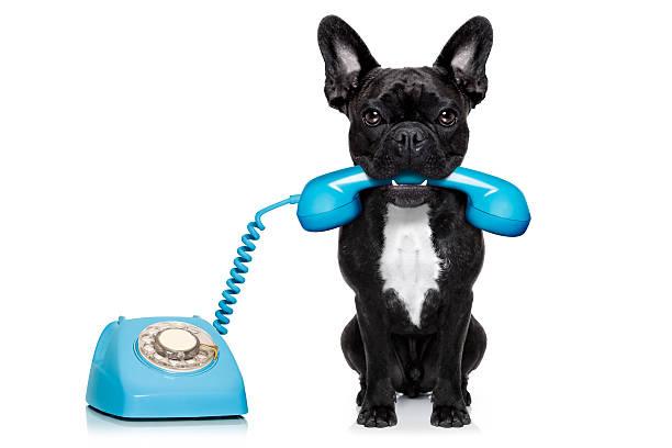Hund mit einem Telefon - – Foto