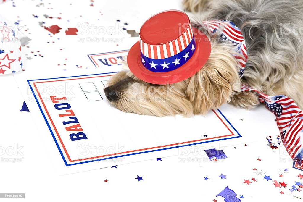 Dog Tired After Elections royalty-free stock photo