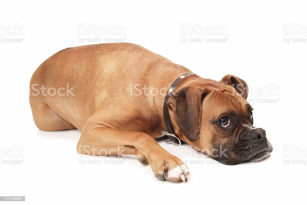 Dog Tired stock photo