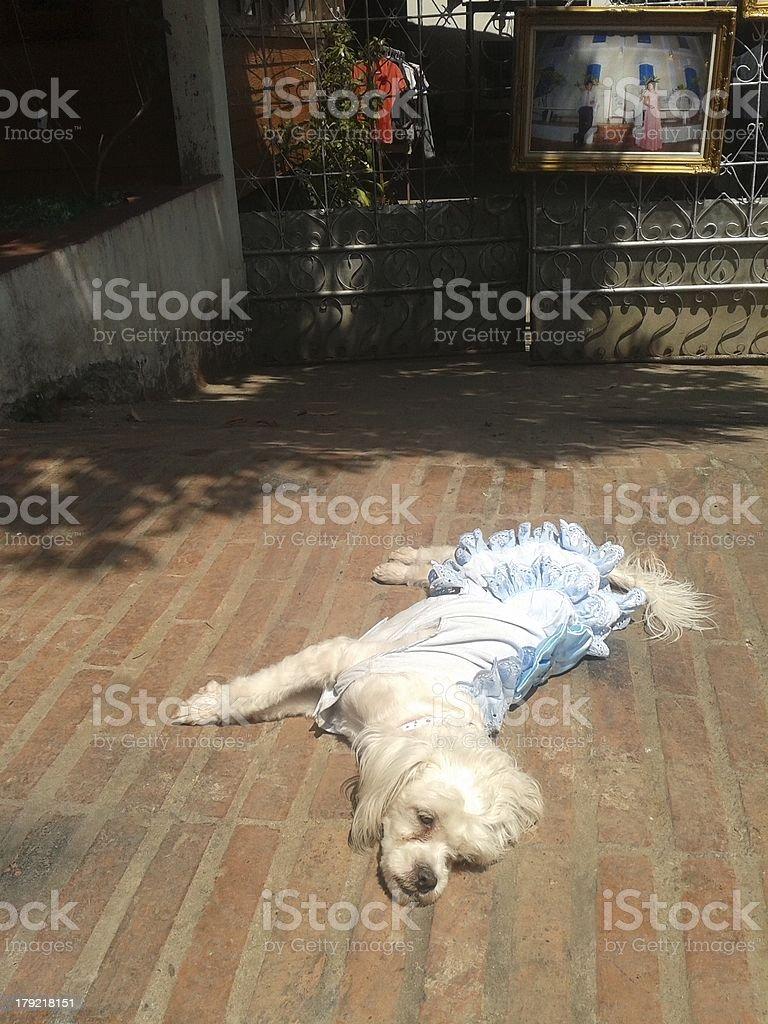 Dog tired stock photo