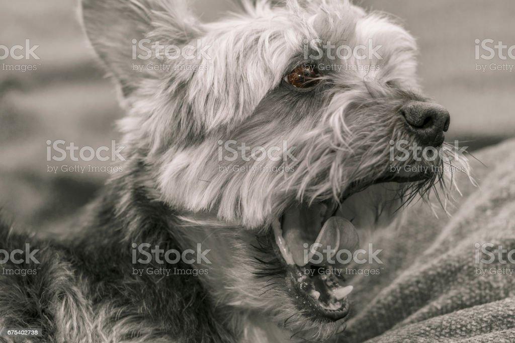 Dog tired royalty-free stock photo