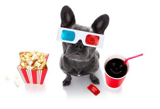 Hund zum Film – Foto