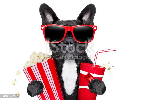 istock dog to the movies 486920275