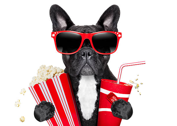 Dog to the movies picture id486920275?b=1&k=6&m=486920275&s=612x612&w=0&h=o3xiizhombjhhooxr yghvkjxwce34cttz lb712rzw=