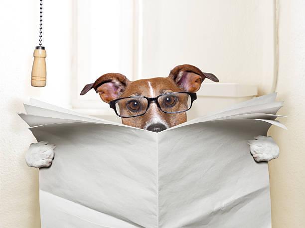 hund toilette - durchfall beim hund stock-fotos und bilder