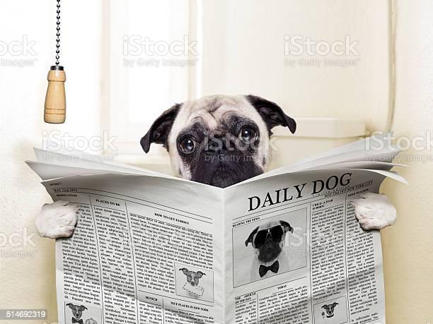 Dog toilet picture id514692319?b=1&k=6&m=514692319&s=612x612&h=t vgmiqldqyplcu4x1wt 8l 9b5ff6duvfz7vxvhafa=