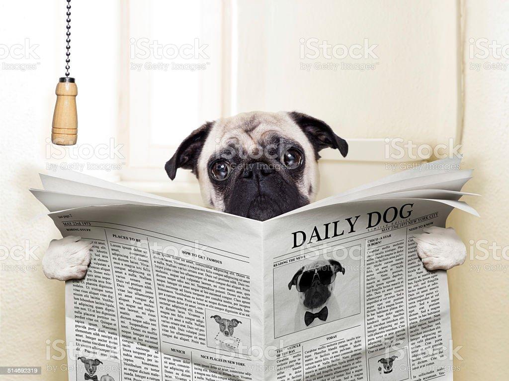 Hund Toilette – Foto