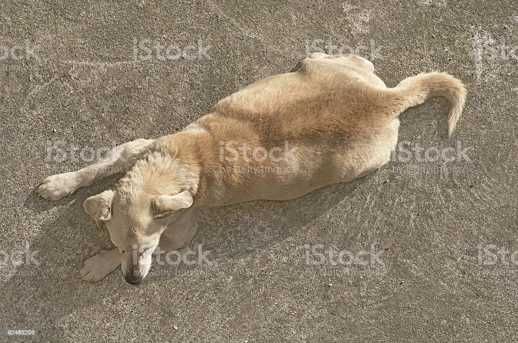 Dog, top view stock photo