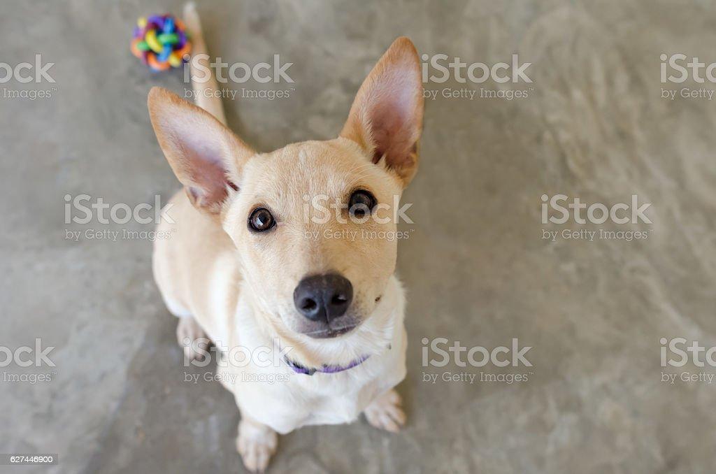 Hund Spielzeug – Foto