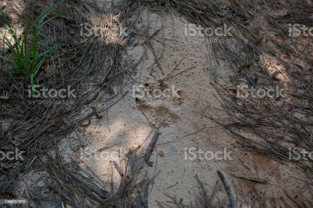 Dog Track – Foto