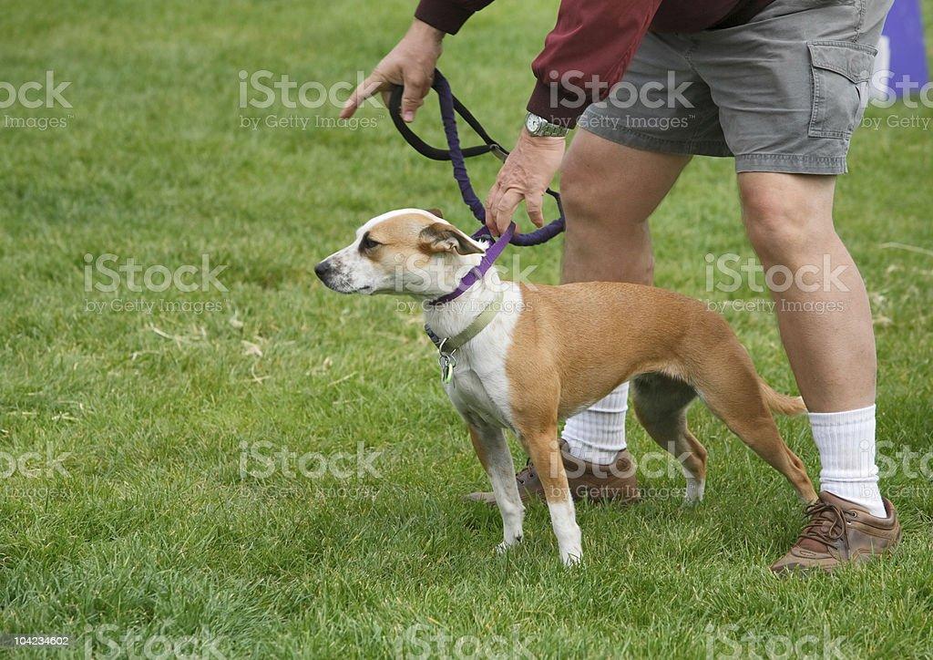 Dog Training royalty-free stock photo