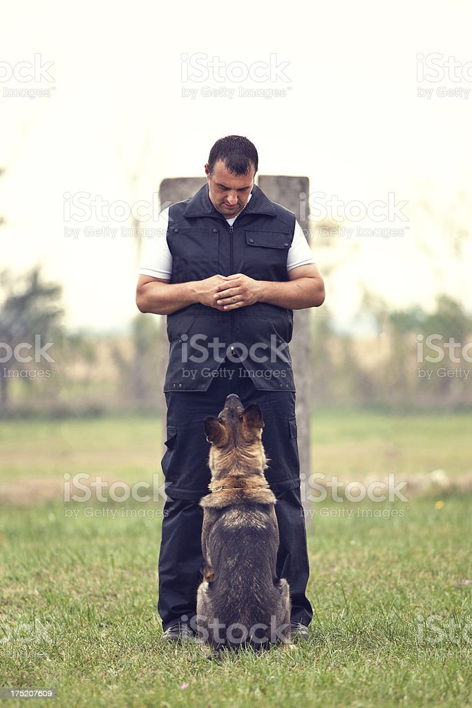 Dog Training royalty-free stock photo