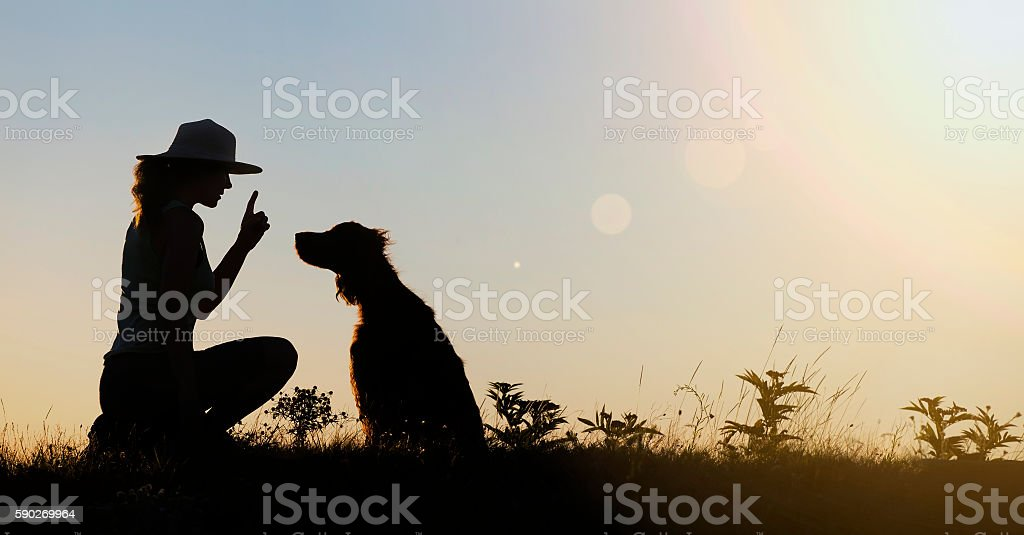 Dog training silhouette stock photo