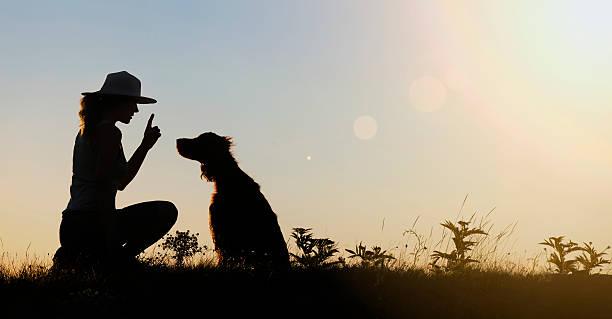 Dog training silhouette stock photo