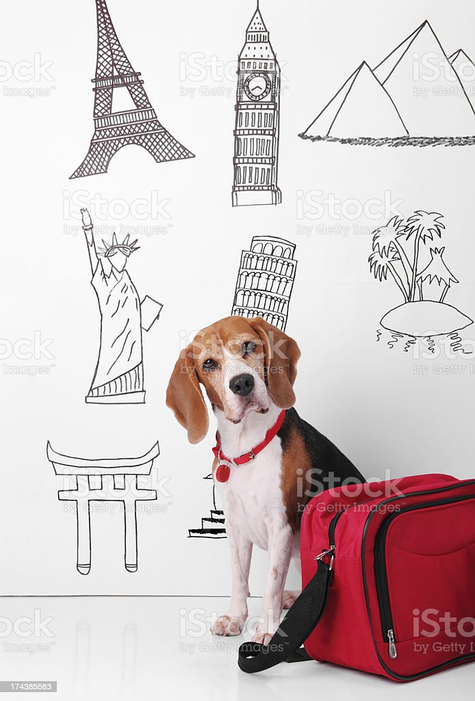 Dog Travel royalty-free stock photo
