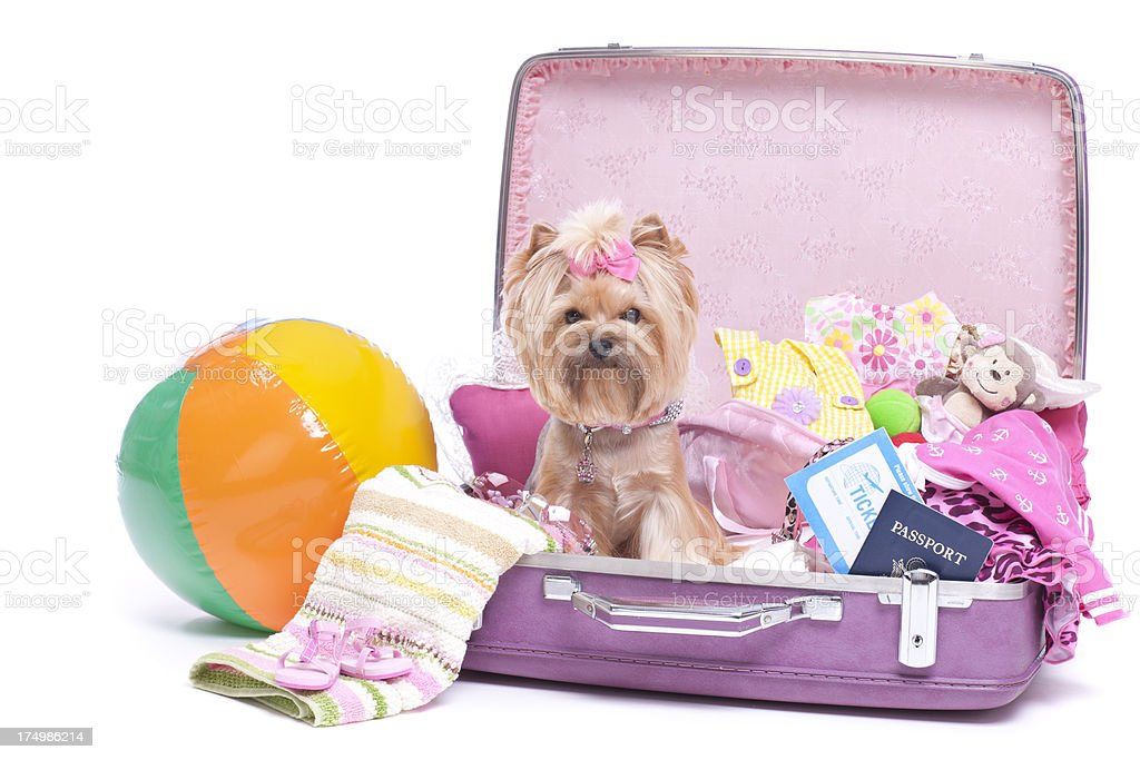 Dog Travel Vacation stock photo