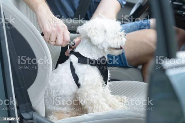 Dog traveling in a car picture id911938438?b=1&k=6&m=911938438&s=612x612&h=vjo3wbfl 7qll7od 18 ikv2jgxfeboihzfw5mbovpo=
