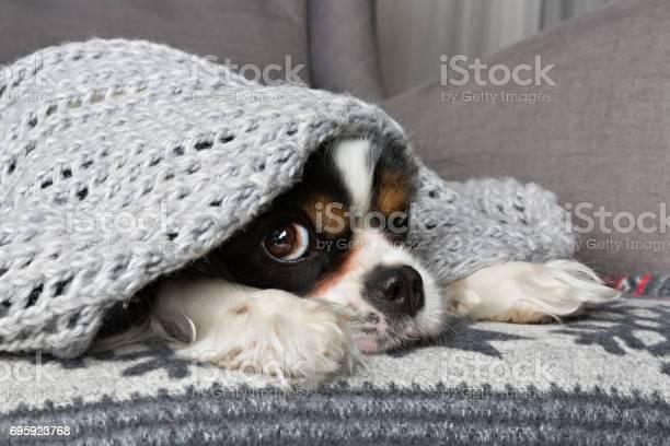 Dog under the blanket picture id695923768?b=1&k=6&m=695923768&s=612x612&h= jnroi1afefmjainavnfmq4ujari5pzautqsxkfih84=
