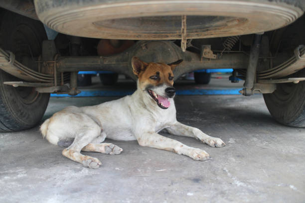 Hond onder de auto. foto