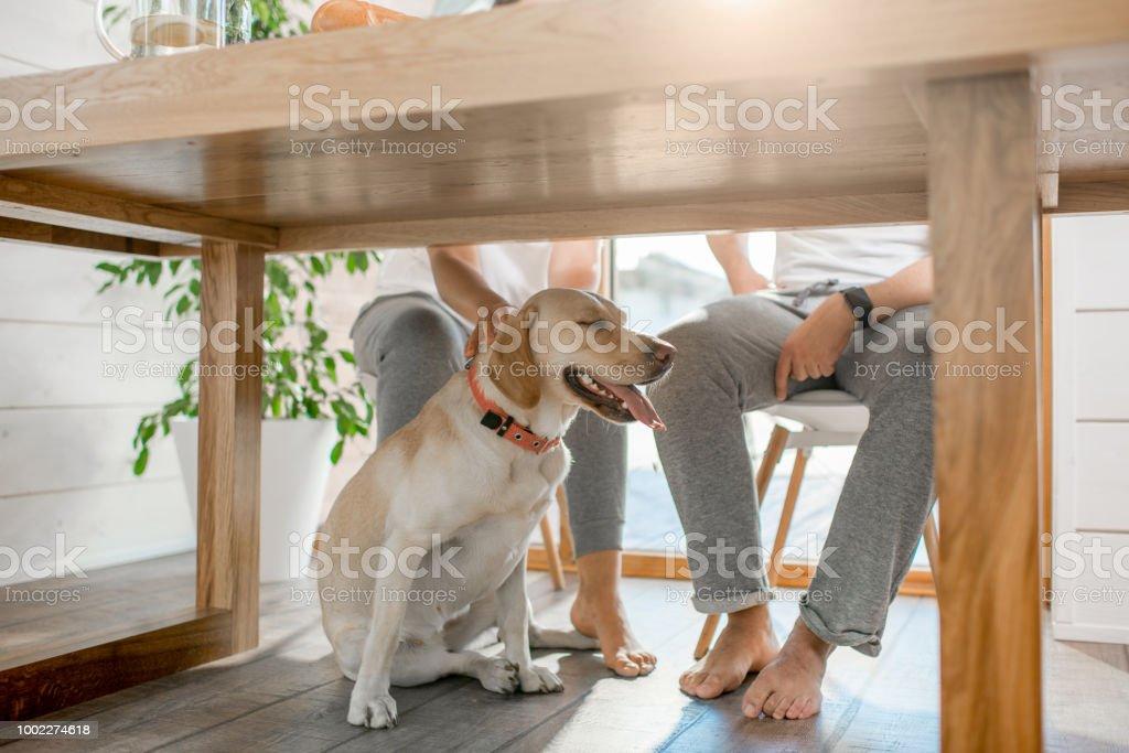 Hund unter dem Tisch zu Hause – Foto