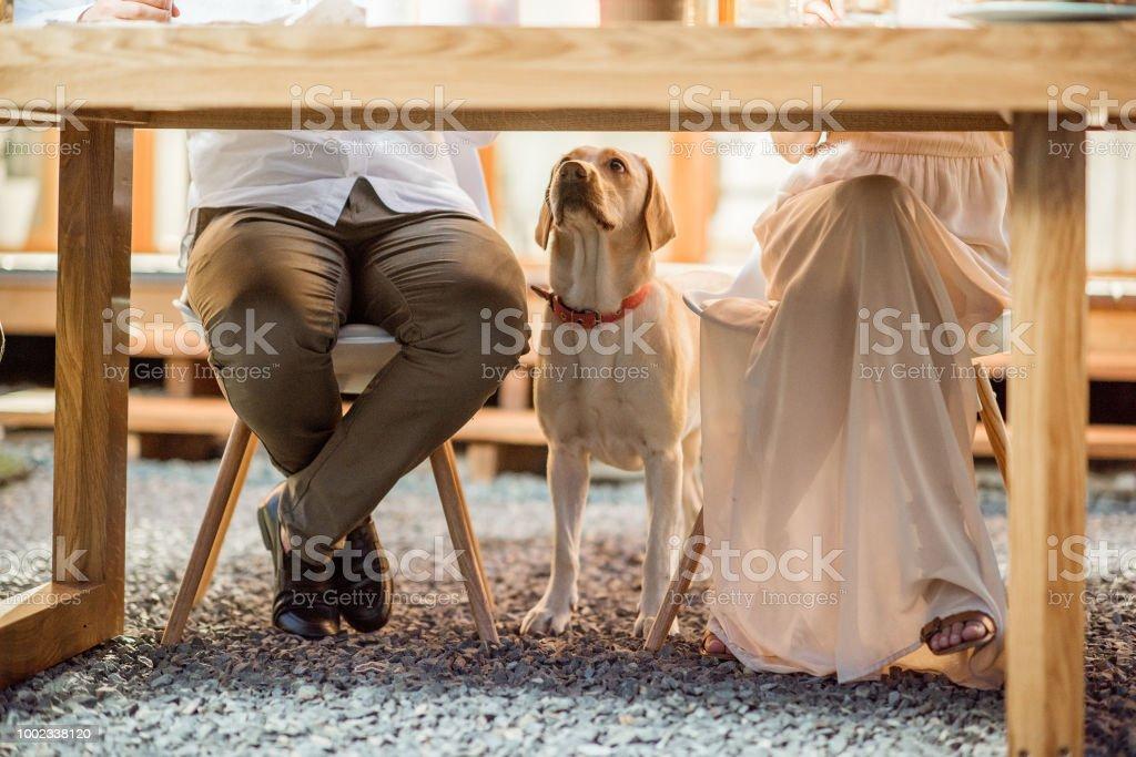 Hund unter dem Tisch – Foto