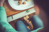Dog under the table waiting for food