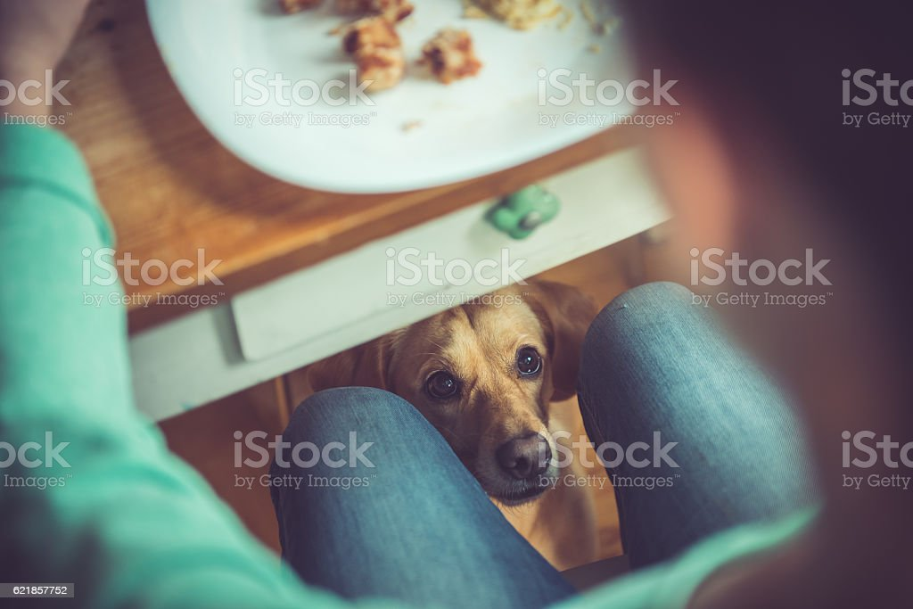 Dog under the table stock photo
