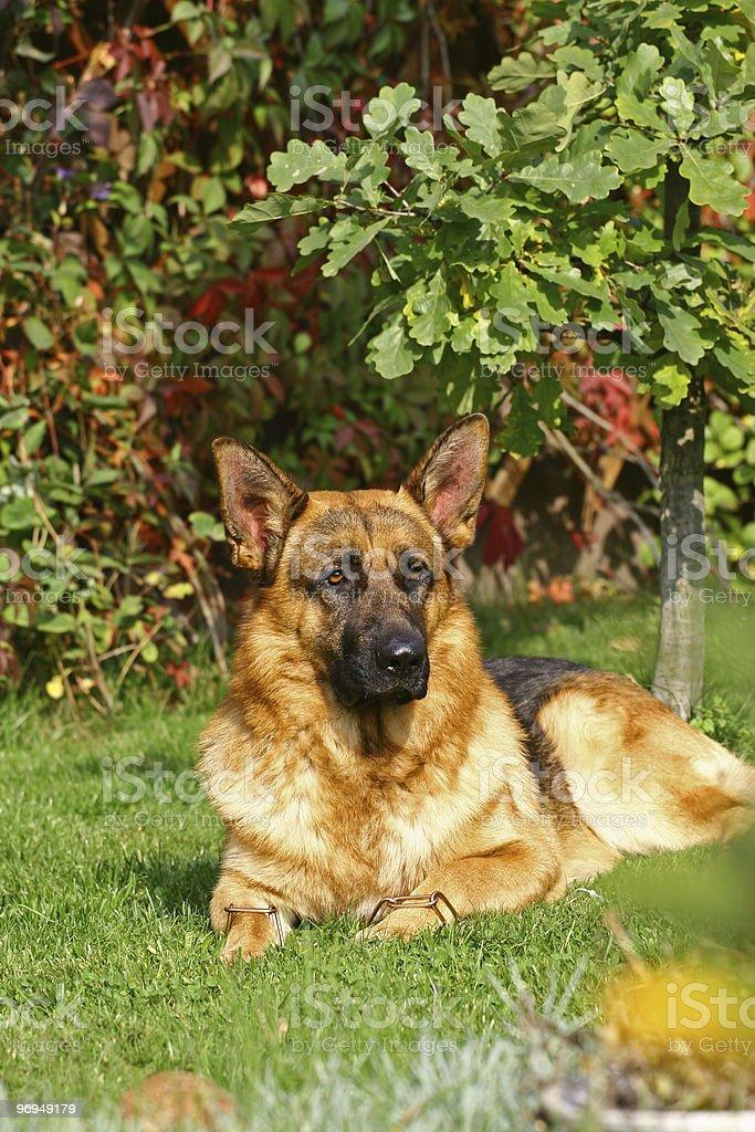 Dog under trees royalty-free stock photo