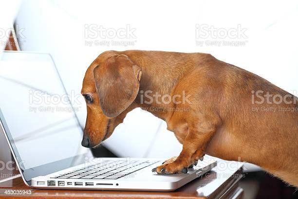 Dog using computer picture id453035943?b=1&k=6&m=453035943&s=612x612&h=7d5aj2l14hze6wpj4n0i9o0wgrsngt32k4l jywwaf8=