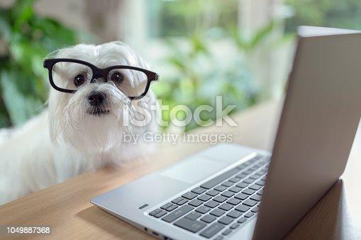 istock Dog using laptop computer 1049887368
