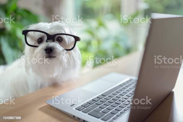 Dog using laptop computer picture id1049887368?b=1&k=6&m=1049887368&s=612x612&h=fu2ra78sqgxcs9y6sfx nuh8gfqcliv9iytreggxofk=