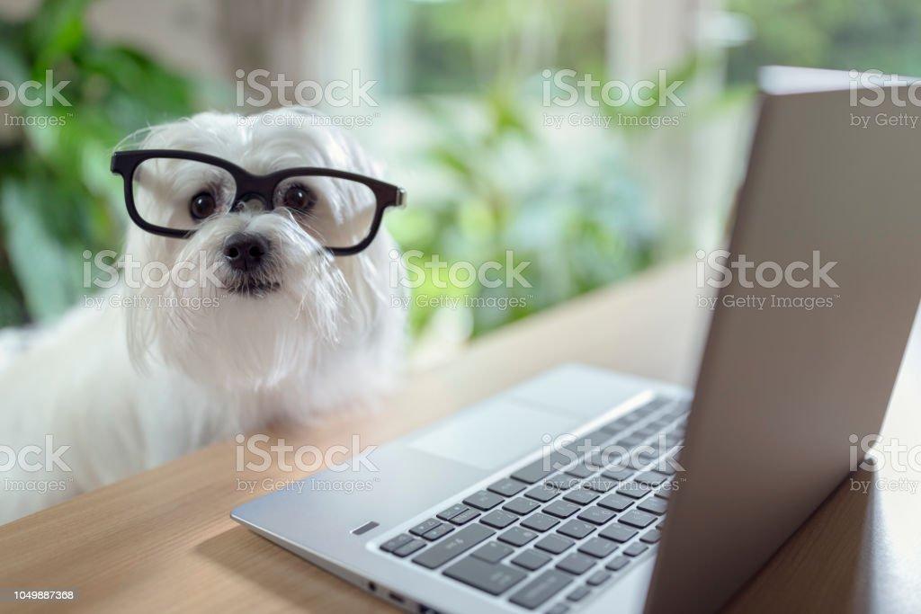 Hund mit laptop-computer – Foto