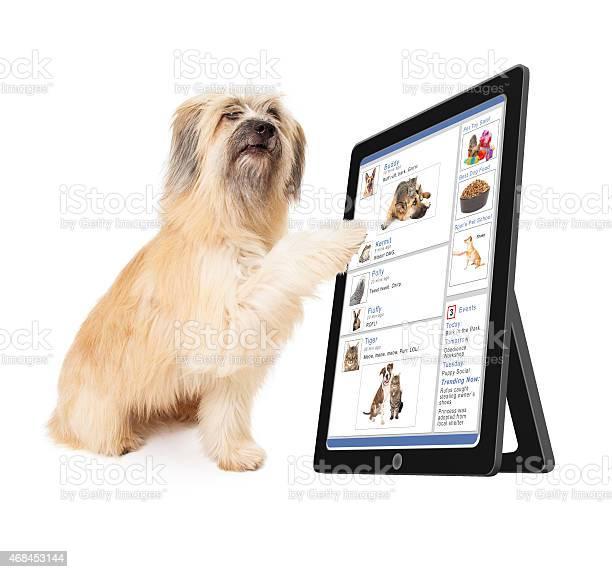 Dog using social media on tablet device picture id468453144?b=1&k=6&m=468453144&s=612x612&h=tngkyfxuhukb5wfot9tb ojnjtflqtymjkqofwawvu4=