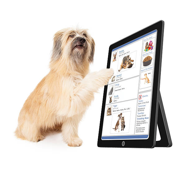 Dog using social media on tablet device picture id468453144?b=1&k=6&m=468453144&s=612x612&w=0&h=ox2yyfivqf 3m8jfvkr25qcpkynwavpc3ctbffzksu8=