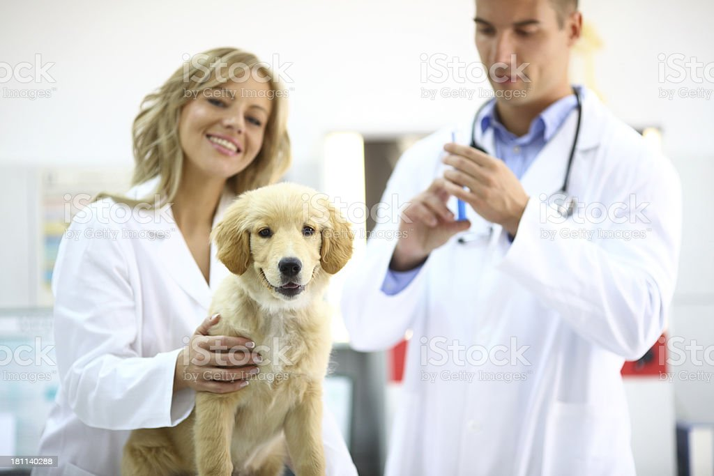 Dog vaccination. royalty-free stock photo