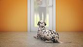 Dog Waiting By Front Door. 3d rendering