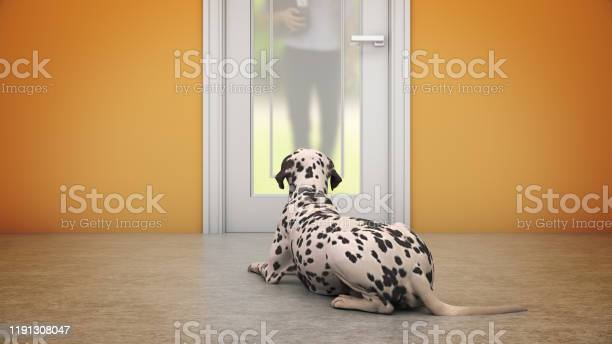 Dog waiting by front door 3d rendering picture id1191308047?b=1&k=6&m=1191308047&s=612x612&h=0gouw b5um hyrlcuobkqfqjsh0bldorp of ivj1ao=