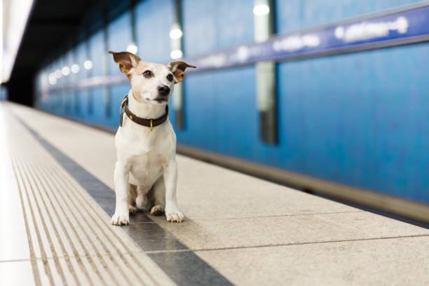 Hund wartet auf Besitzer am Bahnhof – Foto