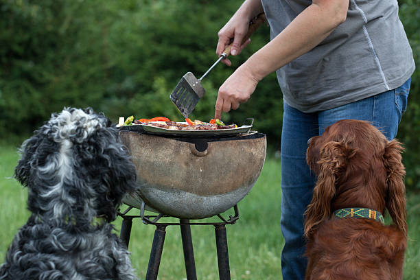 Pies czeka na grilla, czekając na obiad – zdjęcie