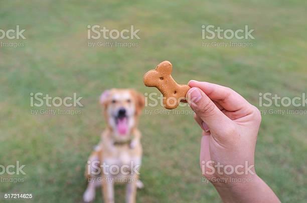 Dog waiting for treat picture id517214625?b=1&k=6&m=517214625&s=612x612&h=b 7ffv8e5m fdgpnnb2b31igm04eqk 7ph25qped318=