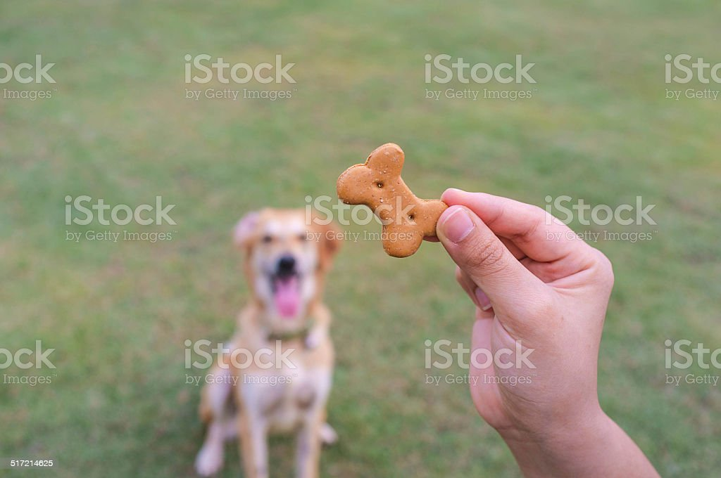 Dog Waiting for Treat stock photo