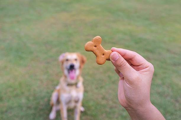 Dog Waiting for Treat stock photo