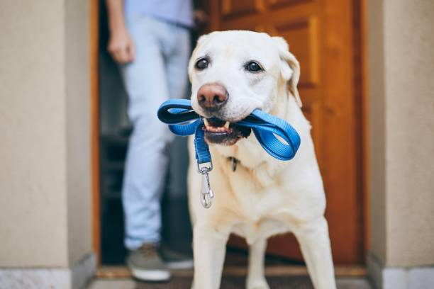 Dog waiting for walk picture id1159809493?b=1&k=6&m=1159809493&s=612x612&w=0&h=ynd74mojw0fnzdys xo8t a0svbgxrj24xr2qqnhzgs=